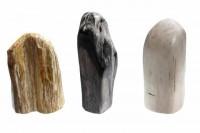 polierte Stücke (140-190mm) aus versteinertem Holz